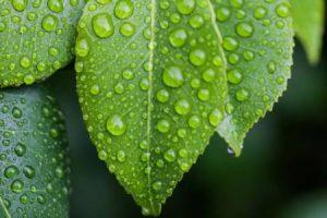 肥料 营养 茎叶