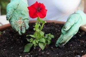 肥料作用 元素作用